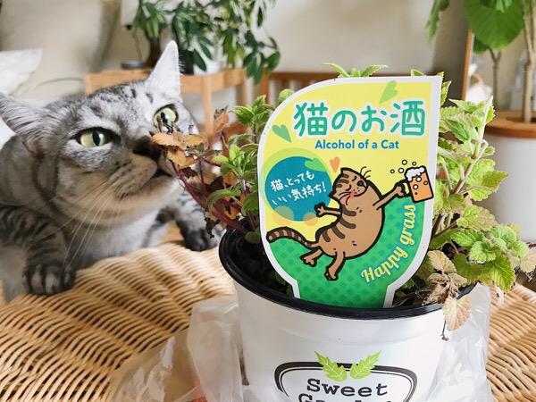 「猫のお酒」と書かれたハーブの鉢。