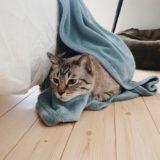毛布で巣作り。
