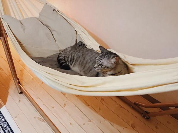 ハンモックに取り残された猫。