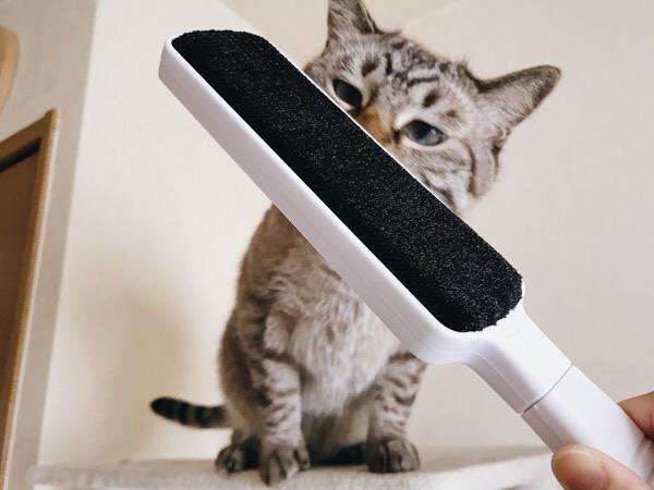 新品のブラシに興味津々な猫。