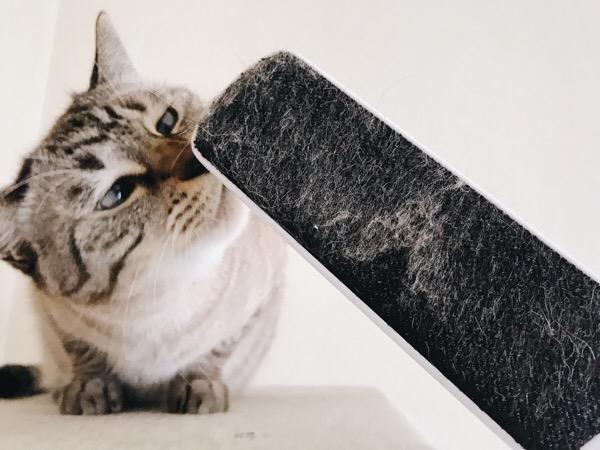ブラシに付いた猫の毛。