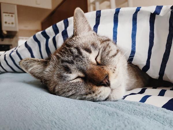 寝ている猫。