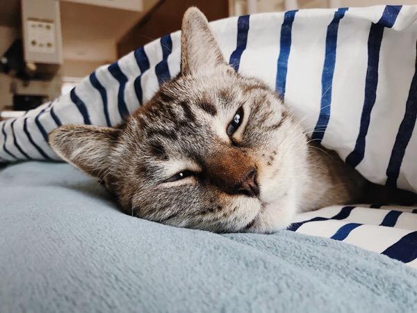 眠そうに薄目を開けてる。