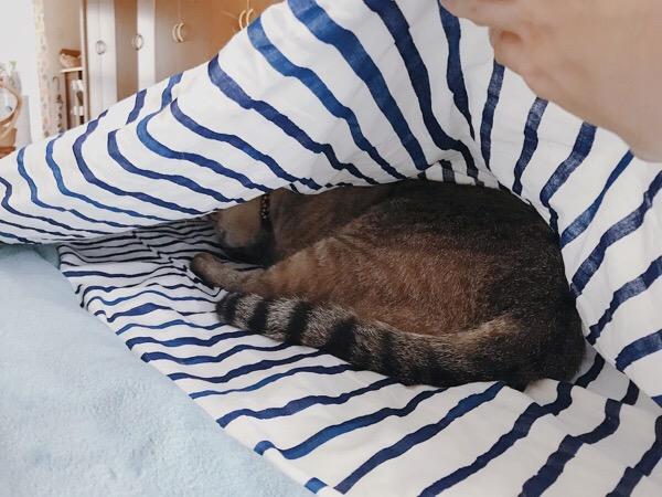 布団の奥にこもる猫。