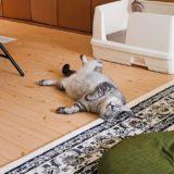 猫が床に落ちている。