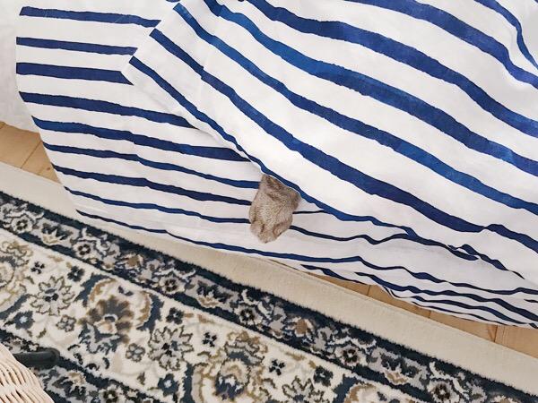 布団からはみ出た猫の片脚。