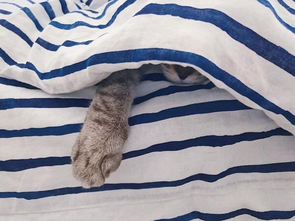 布団に潜ってるムーちゃん。