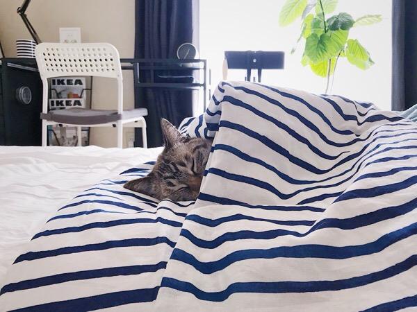 布団をかぶって寝てる猫。