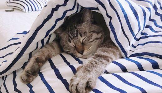 猫のおしっこ汚れをきれいさっぱり洗濯・消臭する方法