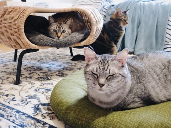 ごはんを待つ猫たち。