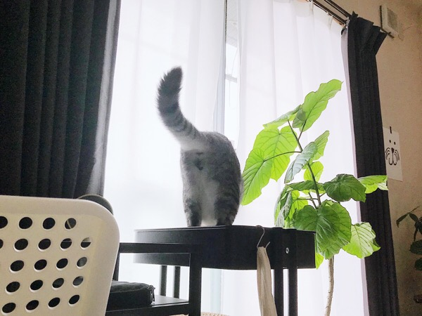 窓から外を見ている猫のお尻。