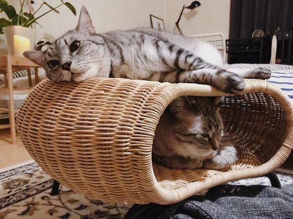 猫たちもお気に入りのスツール。