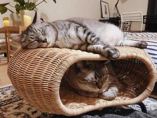 スツールの中と上でくつろぐ兄弟猫。