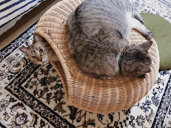 上で寝てるのはテトちゃん。