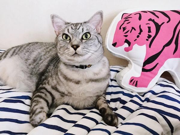 虎と猫の2ショット。
