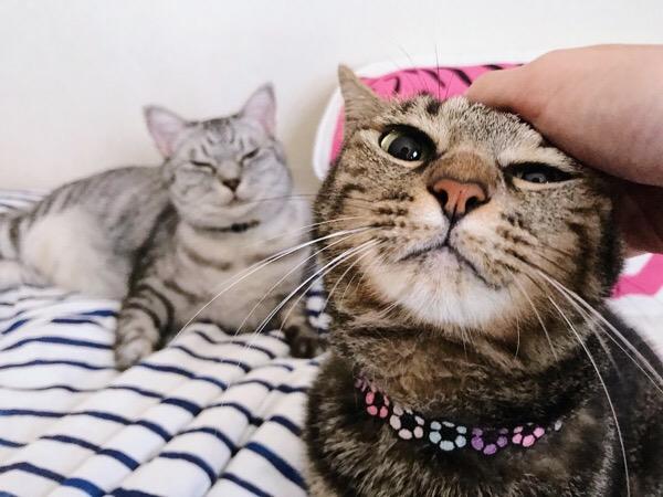 ご機嫌な猫と不機嫌な猫。