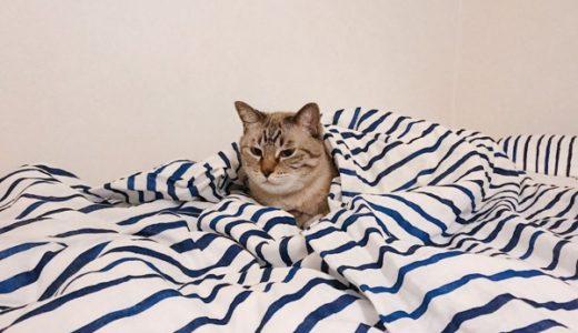不敵な笑みを浮かべる猫