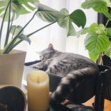 観葉植物と一緒に日向ぼっこしながら昼寝中の猫。