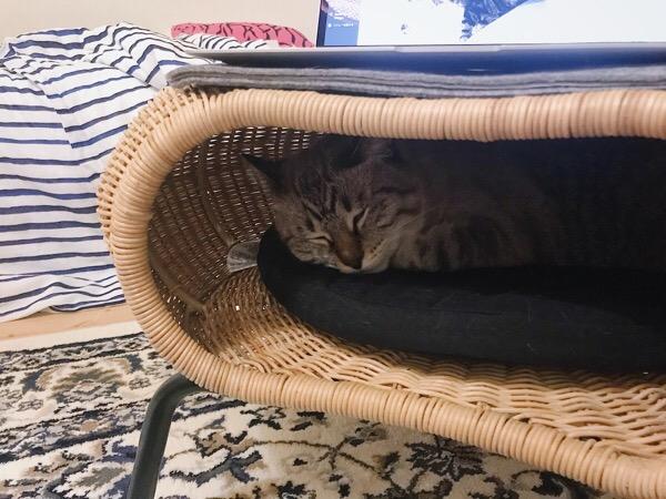 スツールの中で寝てる猫。
