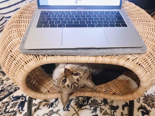 パソコンの下からひょっこり顔を出す猫。