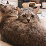 仲良し兄弟猫。