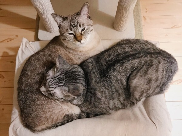 おとなしく枕になるムーちゃん。