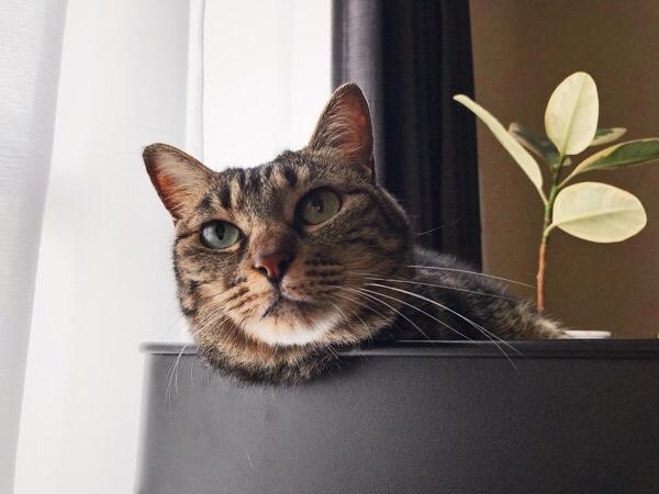 遠くを見つめる猫。
