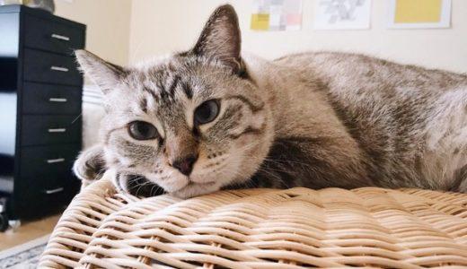 猫の体重記録(8月〜9月)
