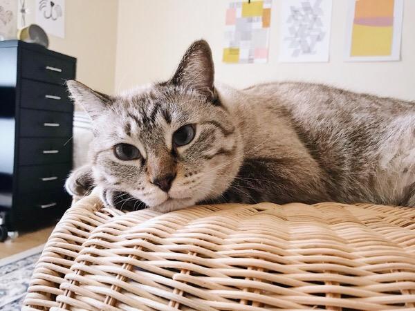 ぼーっとしてる猫。
