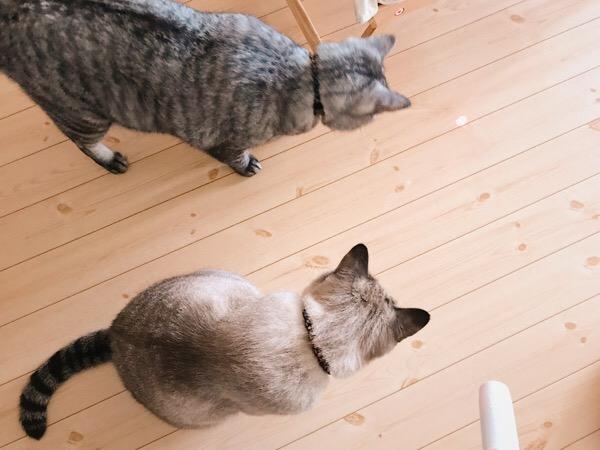 光を見つめる2匹の猫。