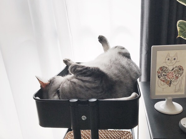 ワゴンの中でひっくり返って寝ている猫。