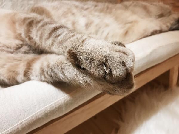 ぴったりくっついた猫の足のアップ。