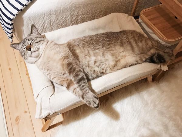 前足を伸ばしたまま寝た。
