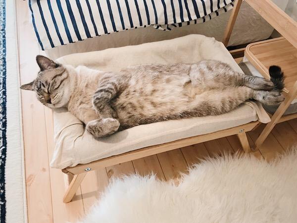 ヘソ天で寝る猫。