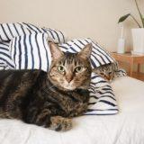 ベッドの上にいる猫たち。