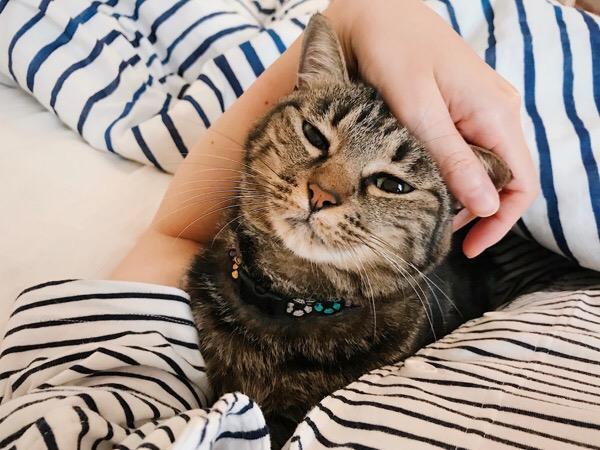 ニンゲンと一緒にふとんに入る猫。