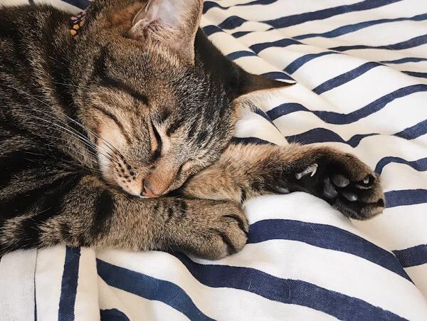 寝てる間に爪のチェック。