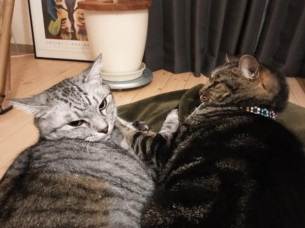 険悪な雰囲気の猫たち。