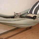 ハンモックに乗ってドヤ顔の猫。
