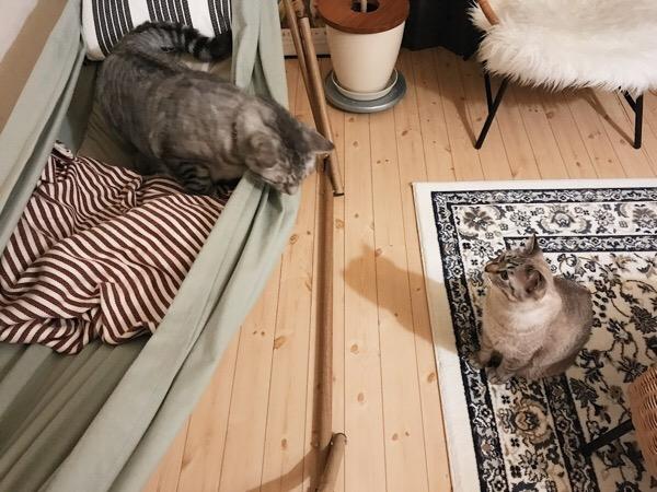 ハンモックと猫たち。