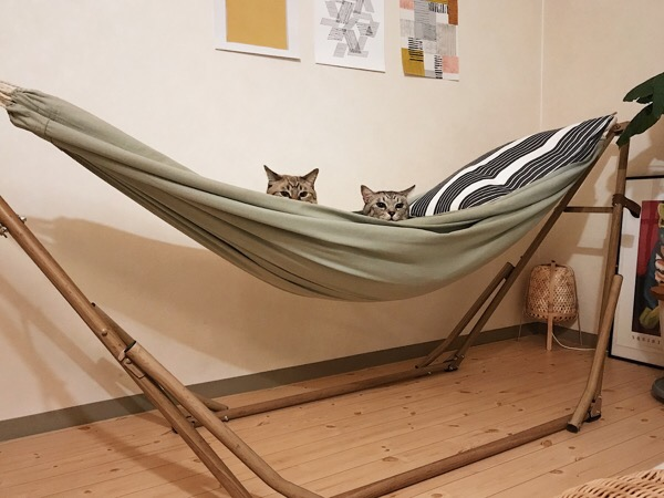 2匹で仲良くハンモックでくつろぐ兄弟猫。