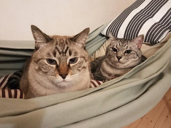 ハンモックを占拠した猫たち。