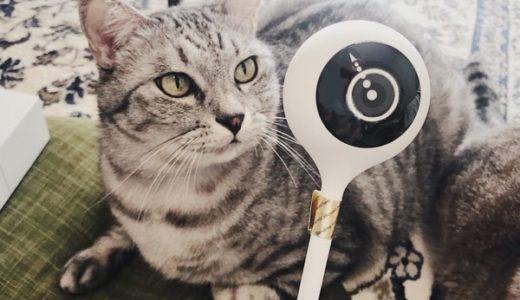 プラススタイルのスマートホームカメラで留守中の猫を撮影してみた