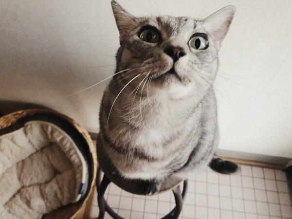撫でられるのを待ち構える猫。