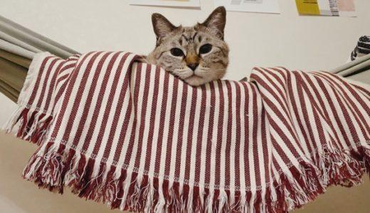 ハンモックから顔を出している猫。
