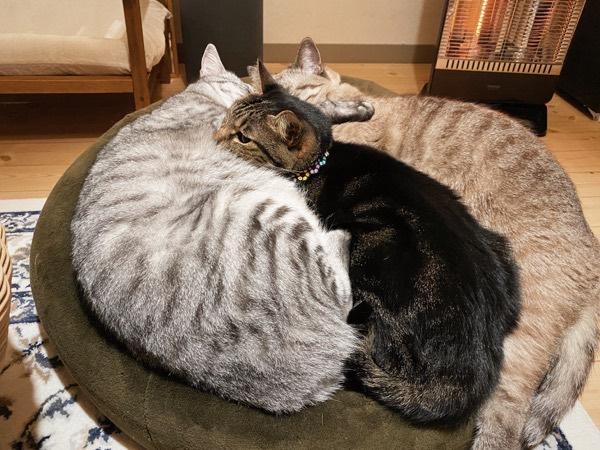 ヒーターの前に集まって団子になる猫たち。