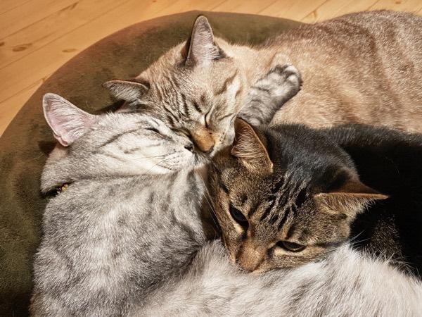3色猫団子。