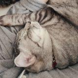 ニンゲンといっしょにスヤスヤ眠る猫。