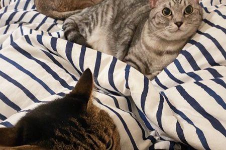 切実に広いベッドが欲しい