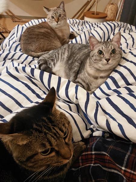 ふとんの上に集まった猫たち。